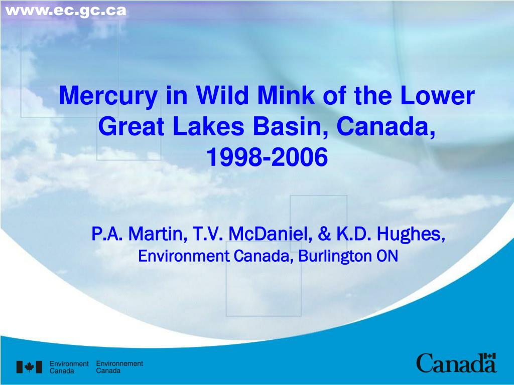 mercury in wild mink of the lower great lakes basin canada 1998 2006 l.