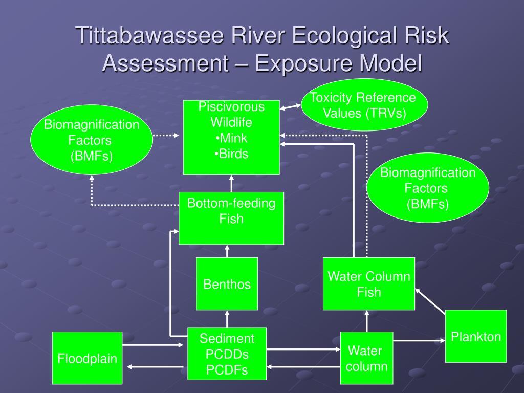 Tittabawassee River Ecological Risk Assessment – Exposure Model