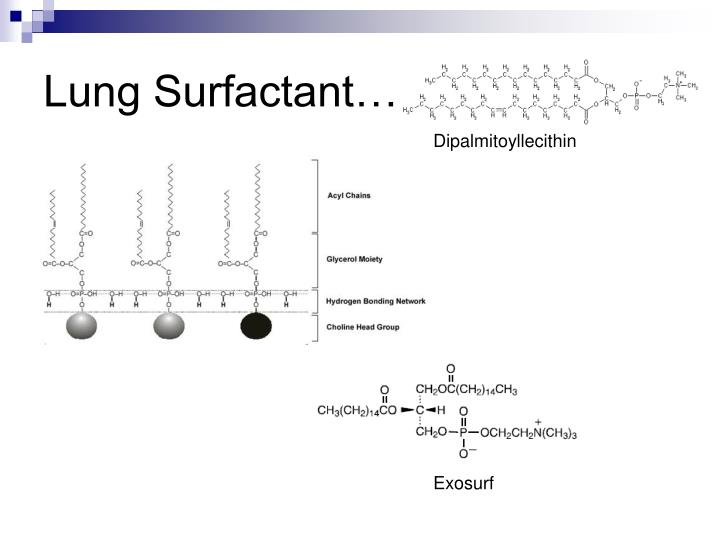 Lung Surfactant…
