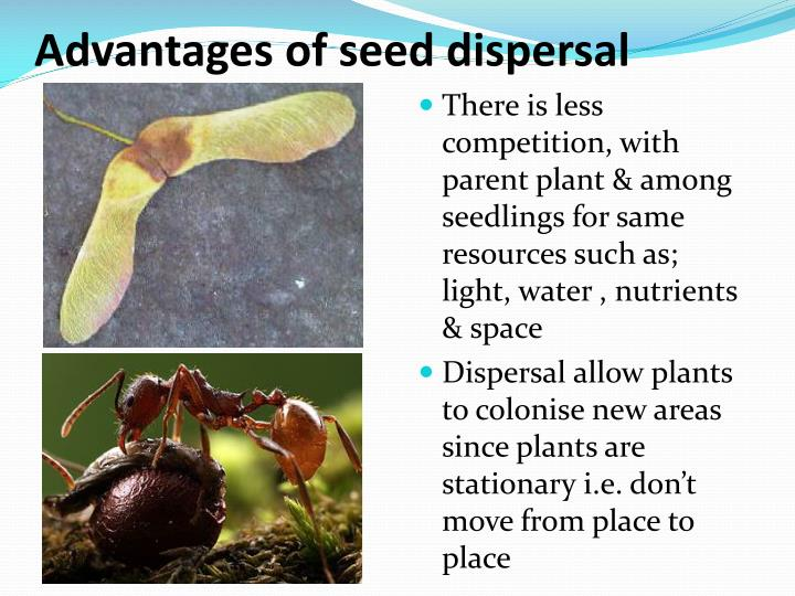 Advantages of seed dispersal