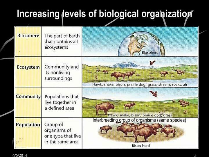 Increasing levels of biological organization