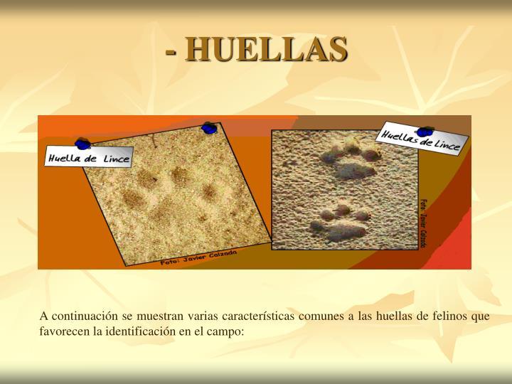 - HUELLAS