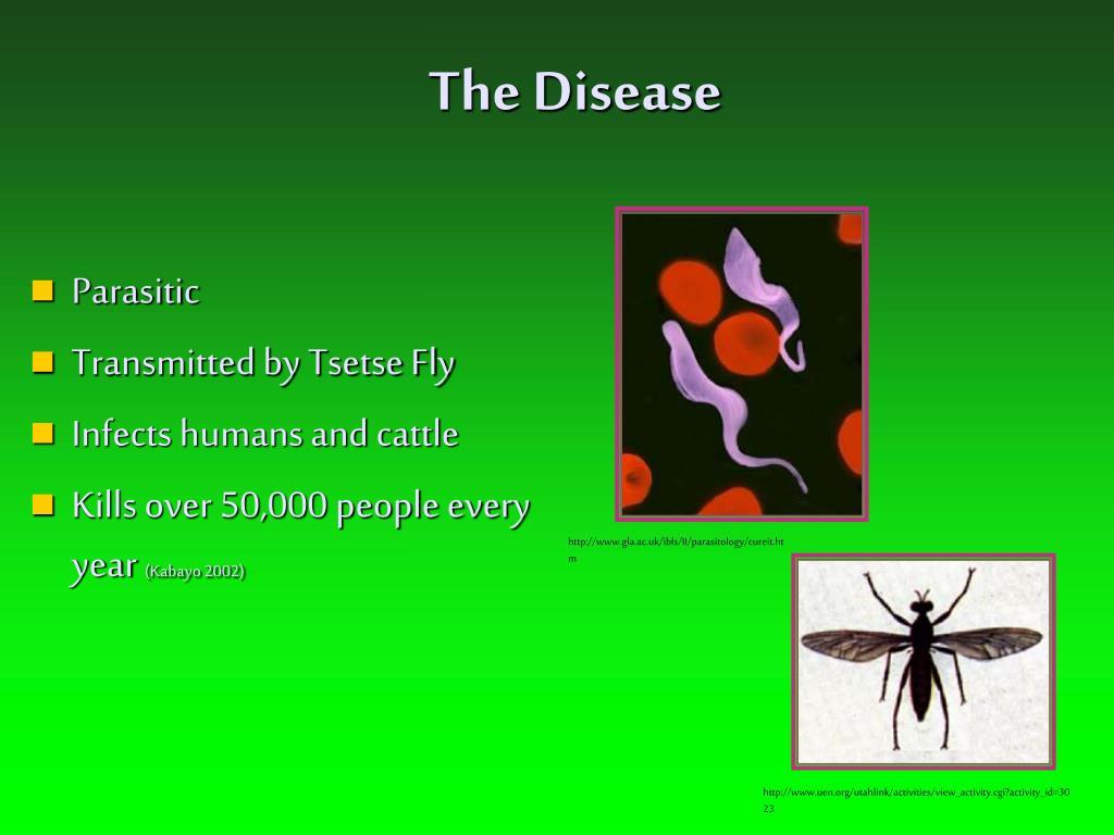 The Disease
