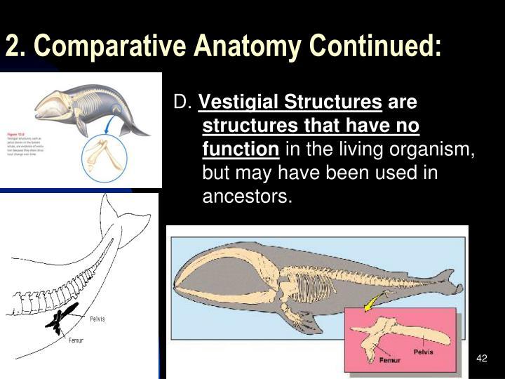 2. Comparative Anatomy Continued: