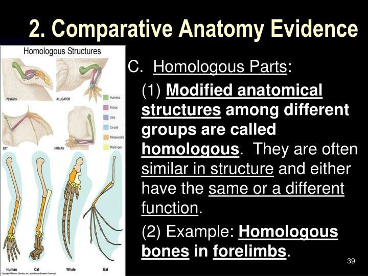 2. Comparative Anatomy Evidence