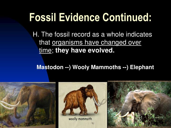 Fossil Evidence Continued: