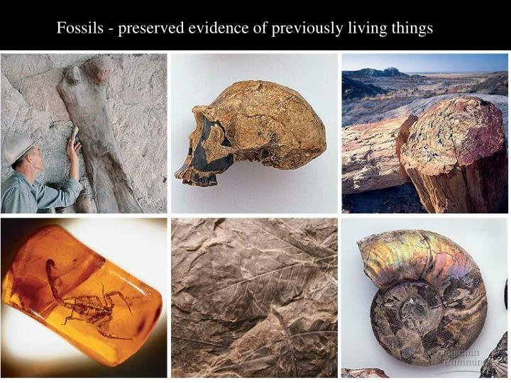 Fossils - preserved evidence of previously living things
