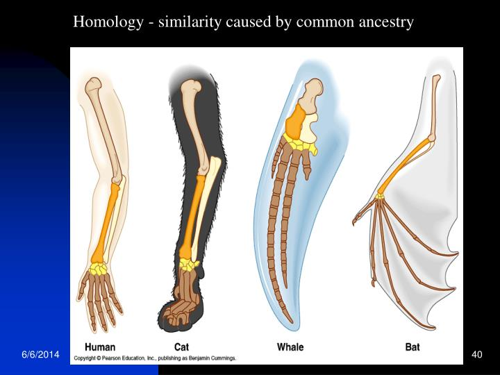 Homology - similarity caused by common ancestry