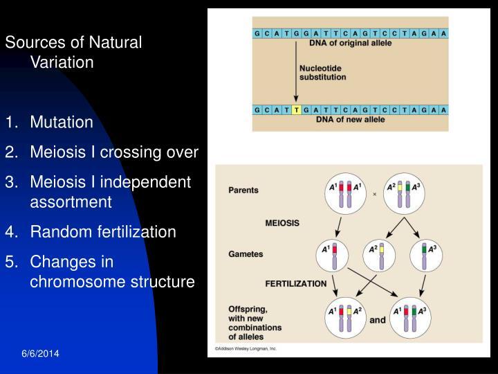 Sources of Natural Variation