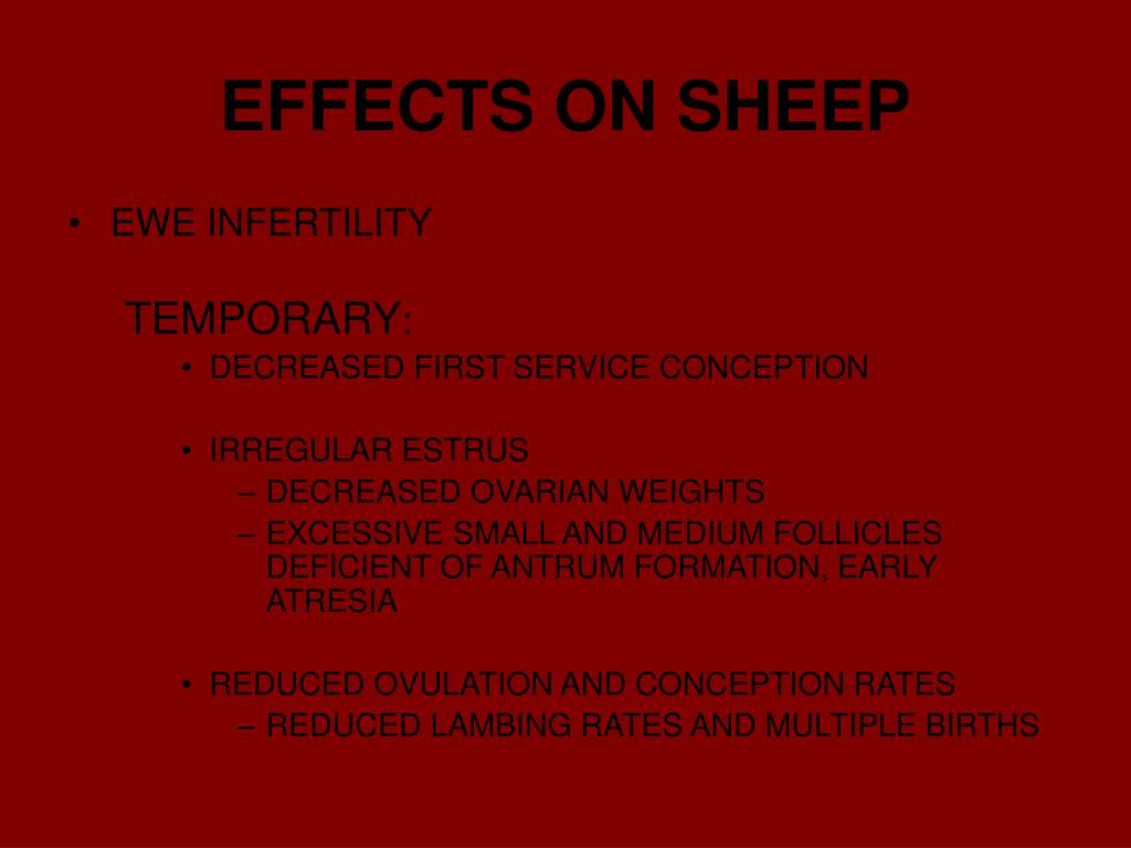EFFECTS ON SHEEP
