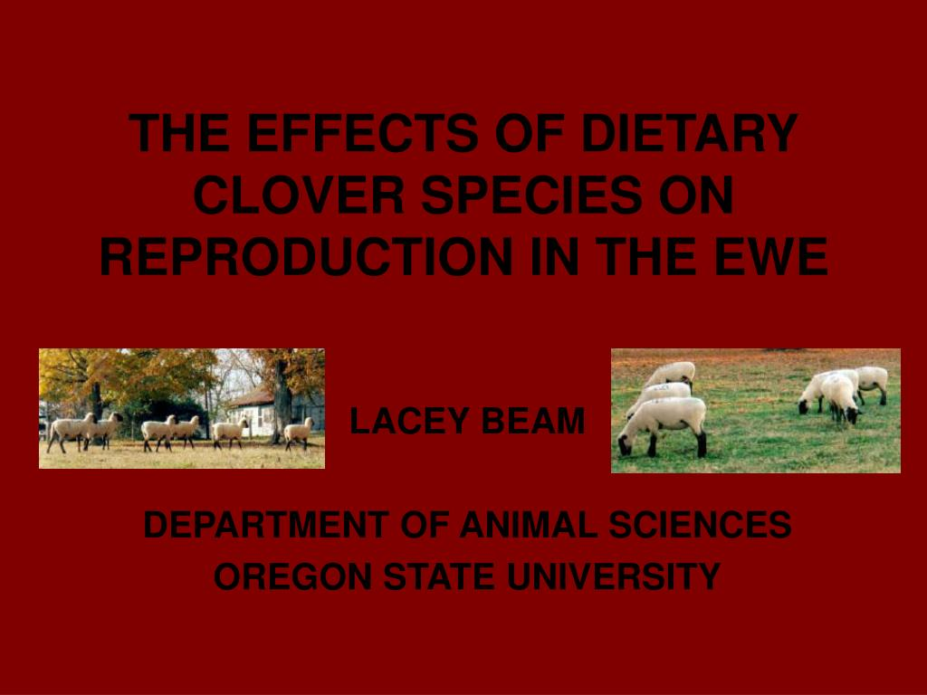 the effects of dietary clover species on reproduction in the ewe l.