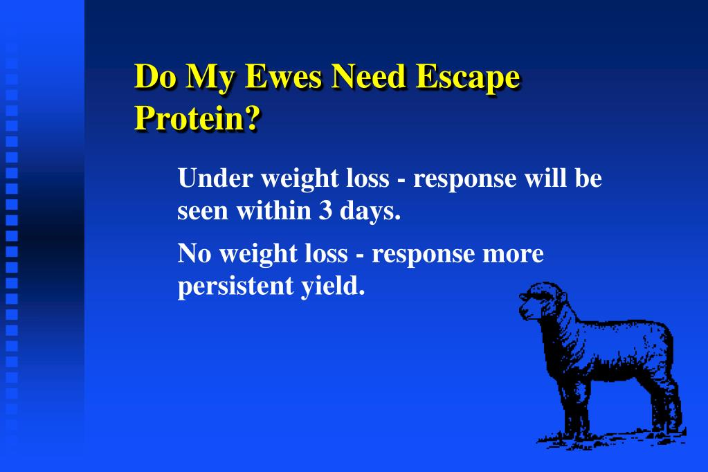 Do My Ewes Need Escape