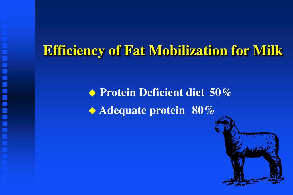 Efficiency of Fat Mobilization for Milk