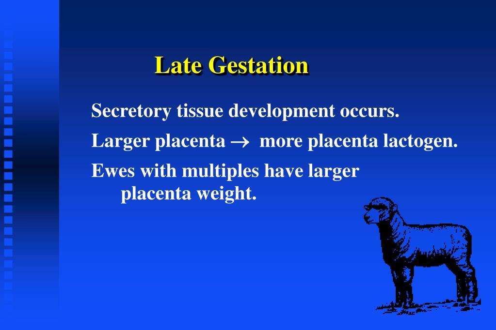 Late Gestation