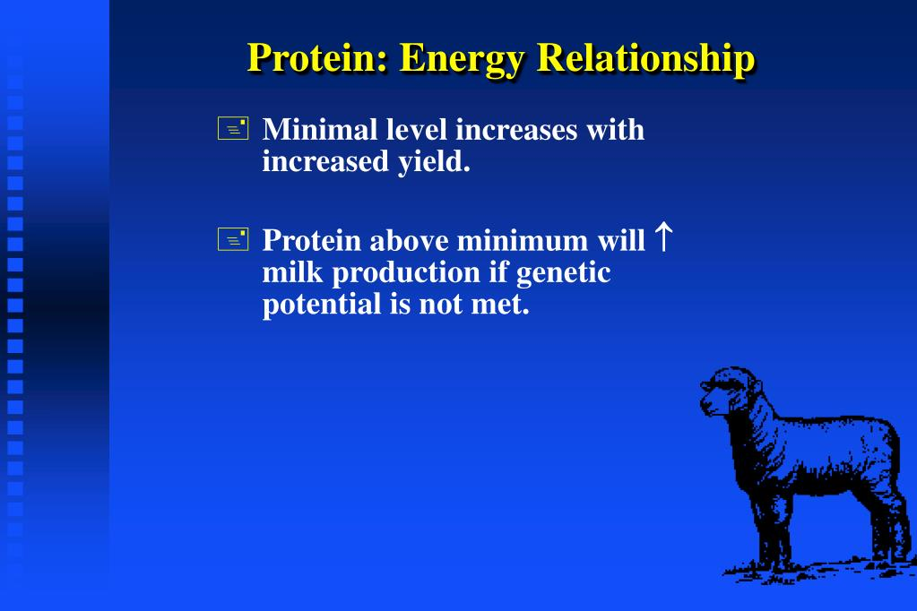 Protein: Energy Relationship