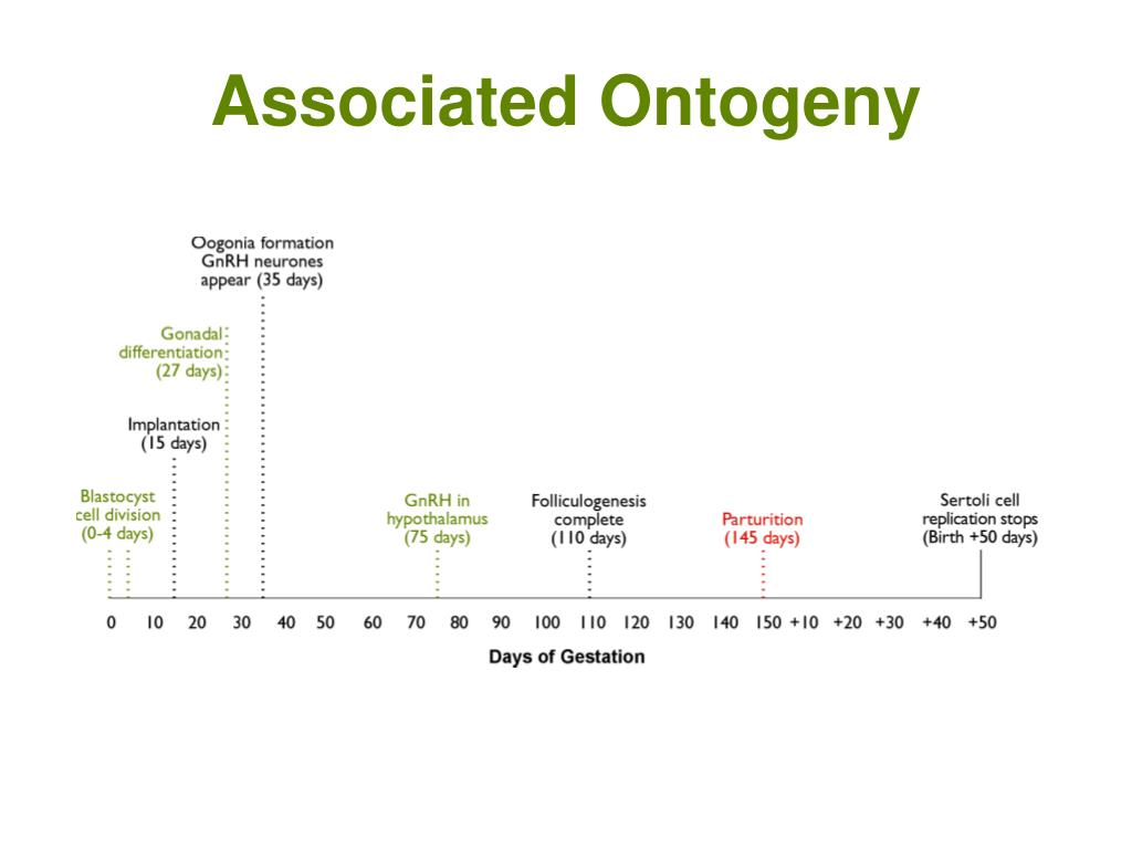 Associated Ontogeny