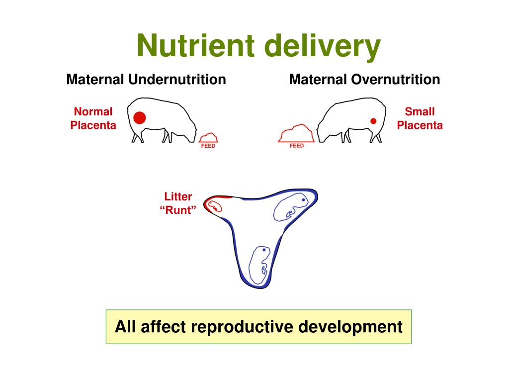 Nutrient delivery