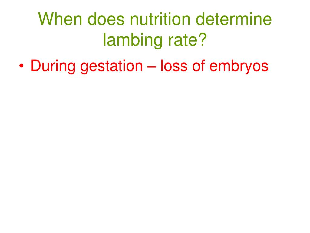 When does nutrition determine lambing rate?