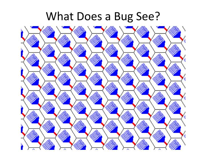 What Does a Bug See?