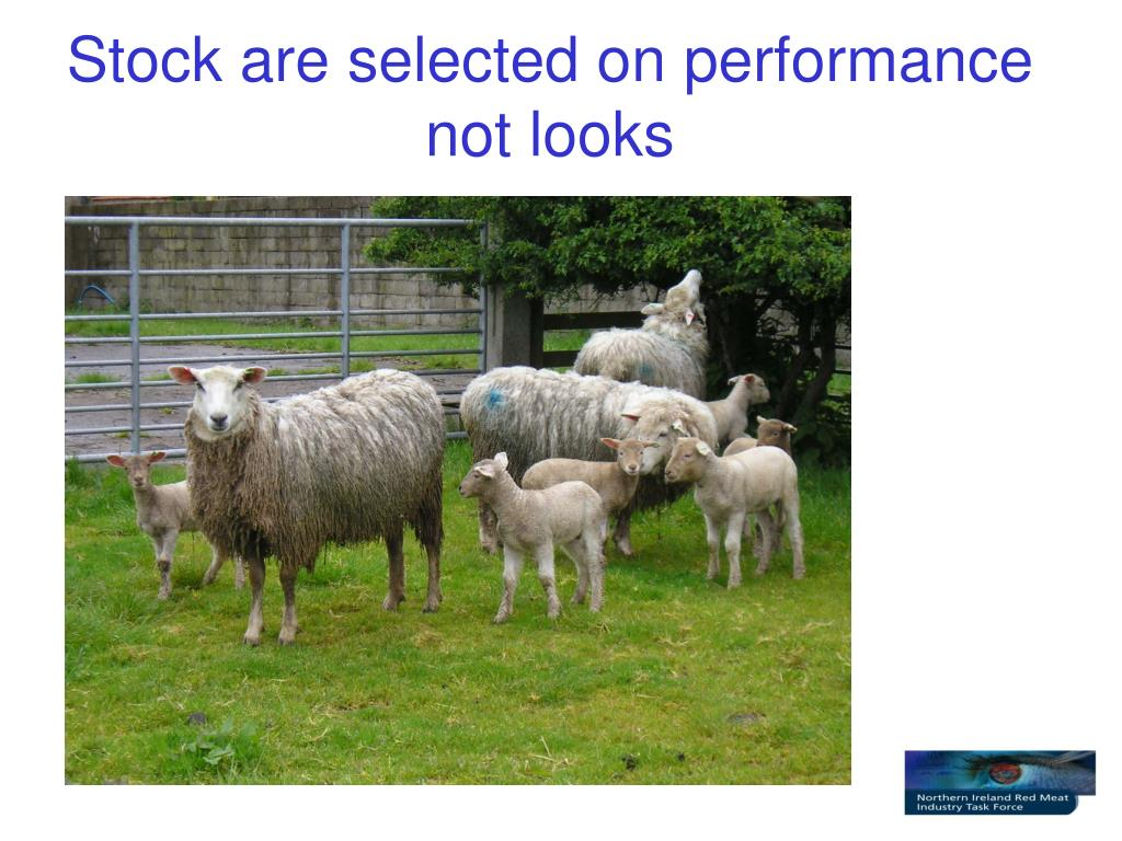 Stock are selected on performance not looks