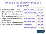what are the characteristics of a good ewe5