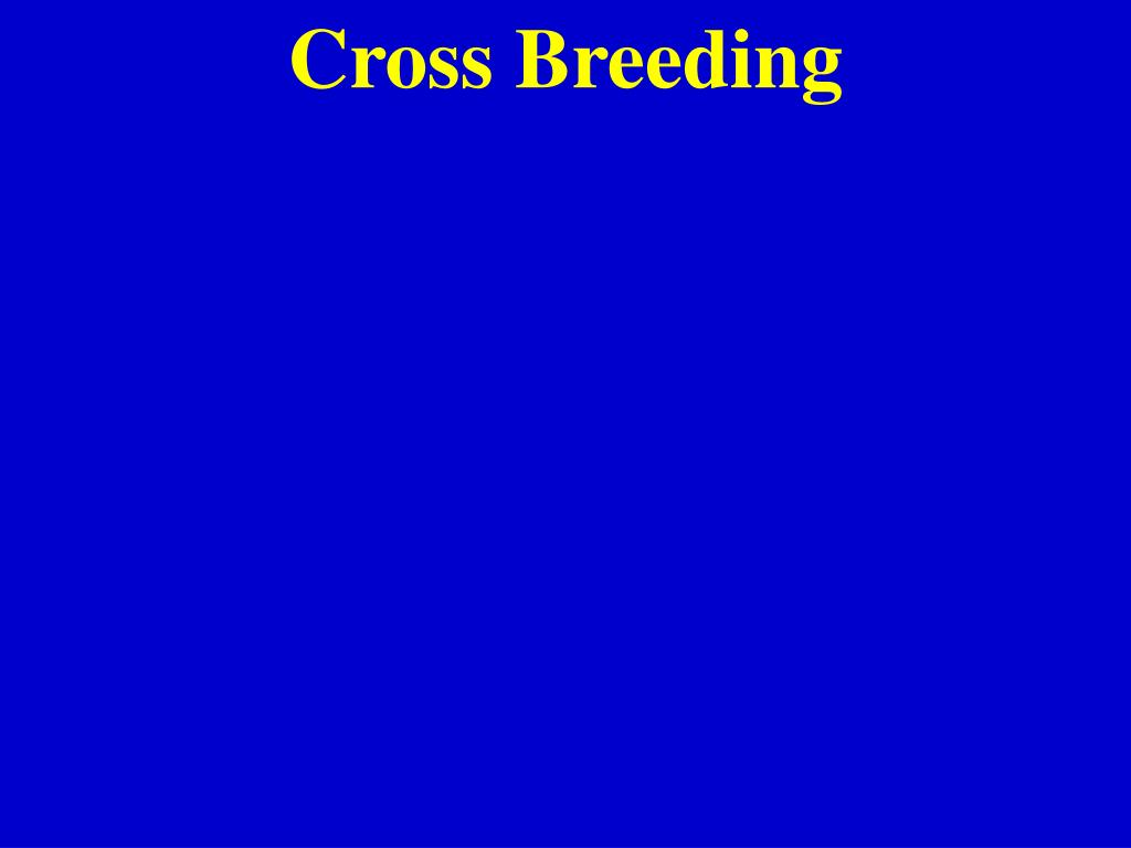 Cross Breeding