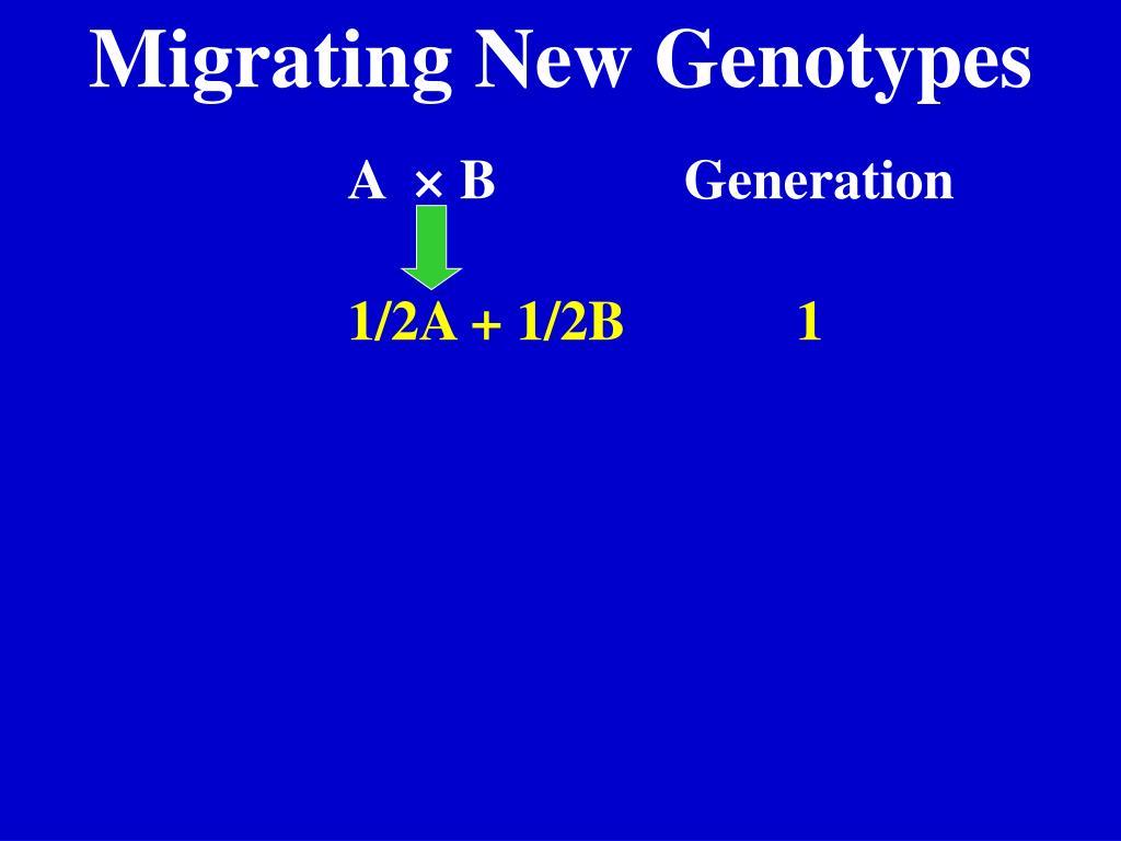 Migrating New Genotypes