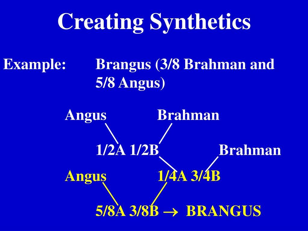 Creating Synthetics