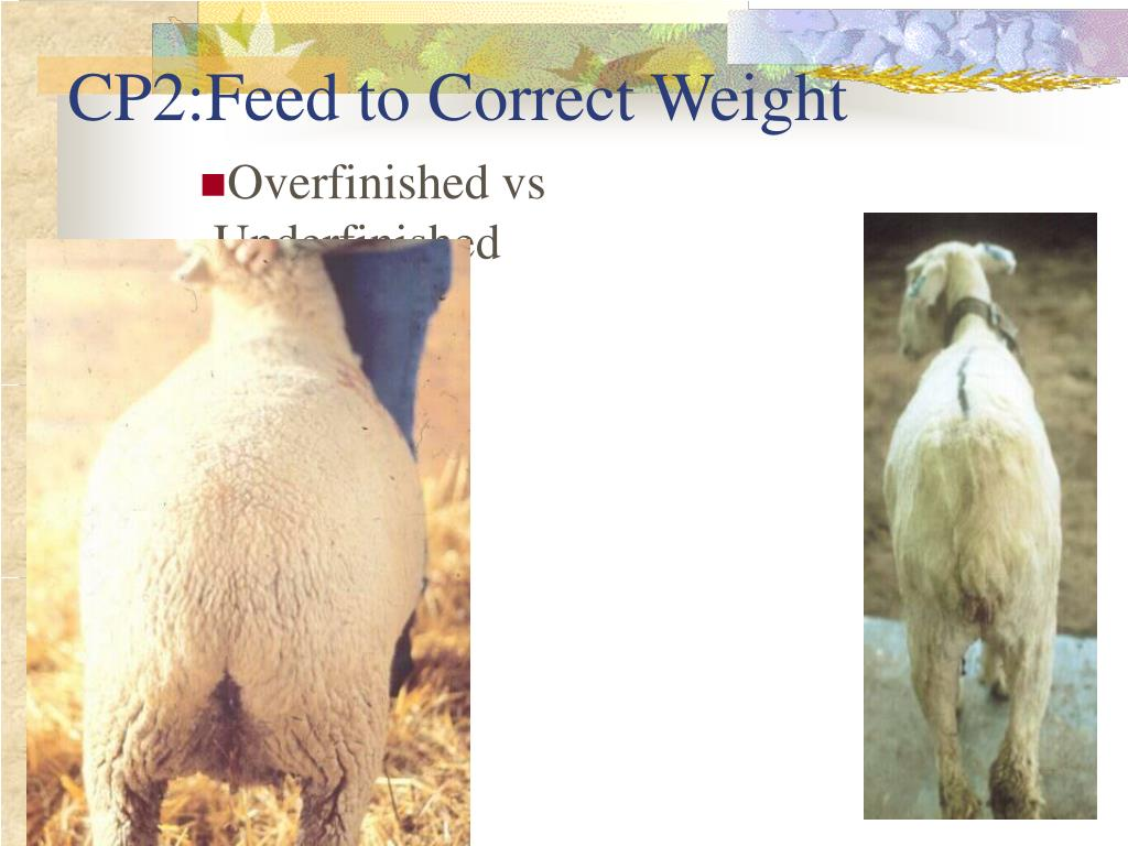 CP2:Feed to Correct Weight