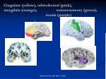 cingulate yellow orbitofrontal pink amygdala orange somatosensory green insula purple