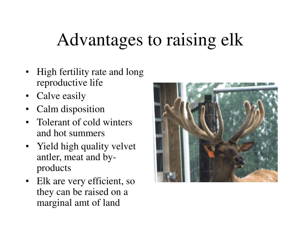 Advantages to raising elk