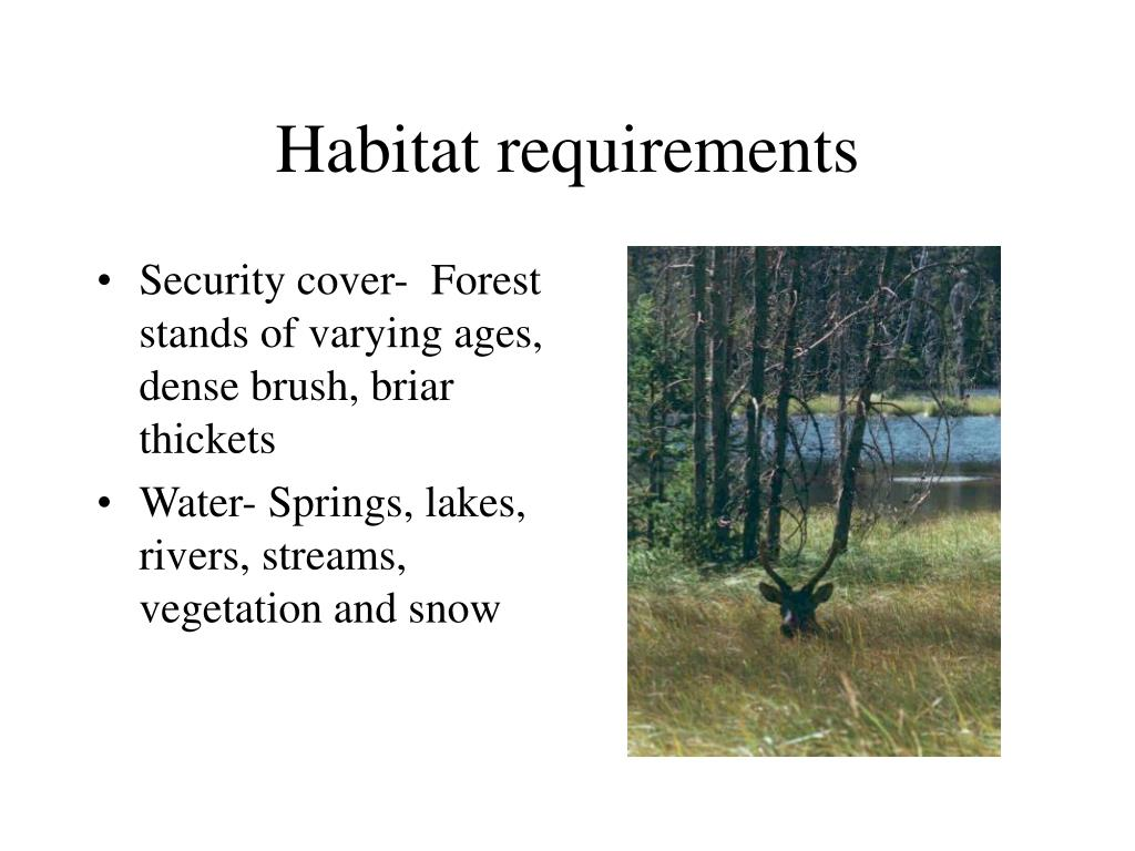 Habitat requirements