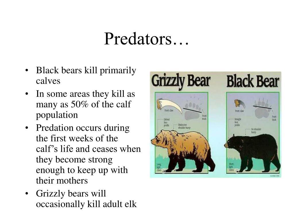 Predators…