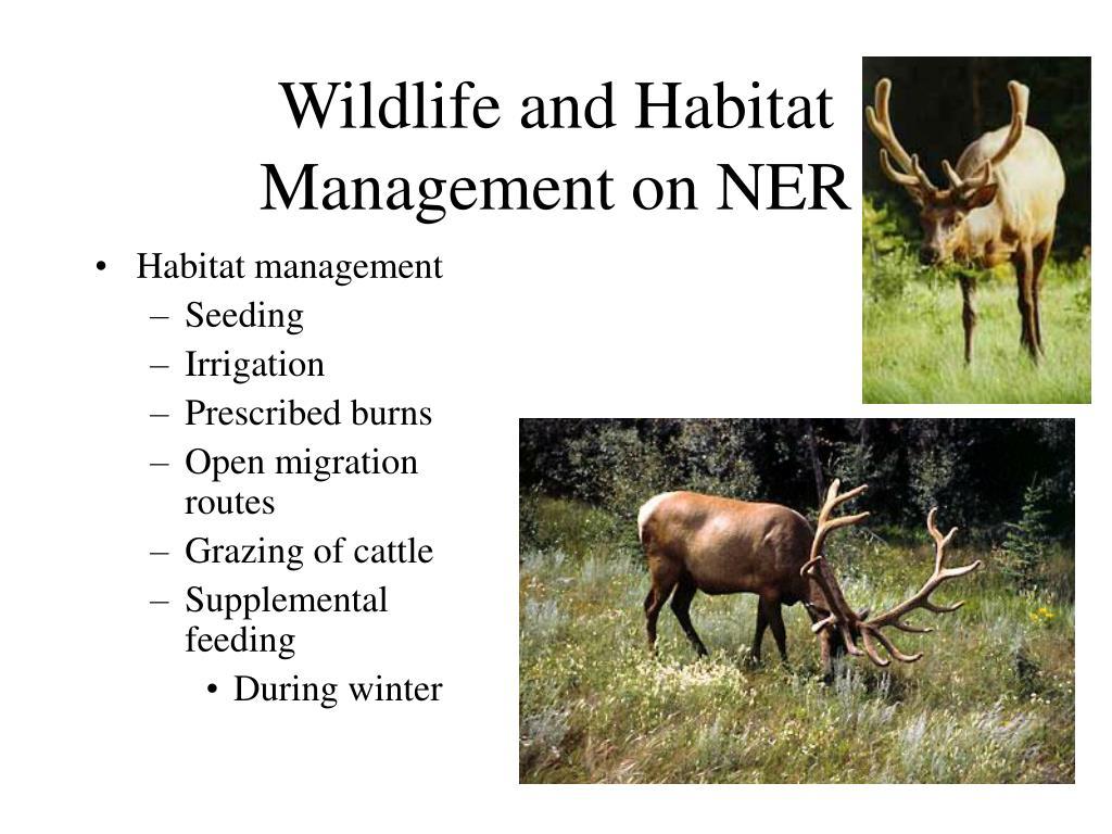 Wildlife and Habitat Management on NER