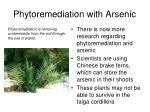 phytoremediation with arsenic