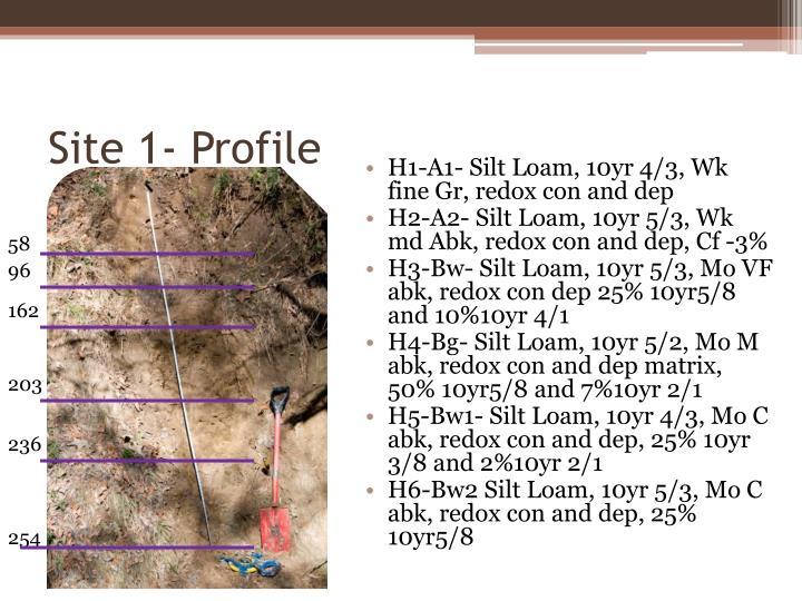 Site 1- Profile