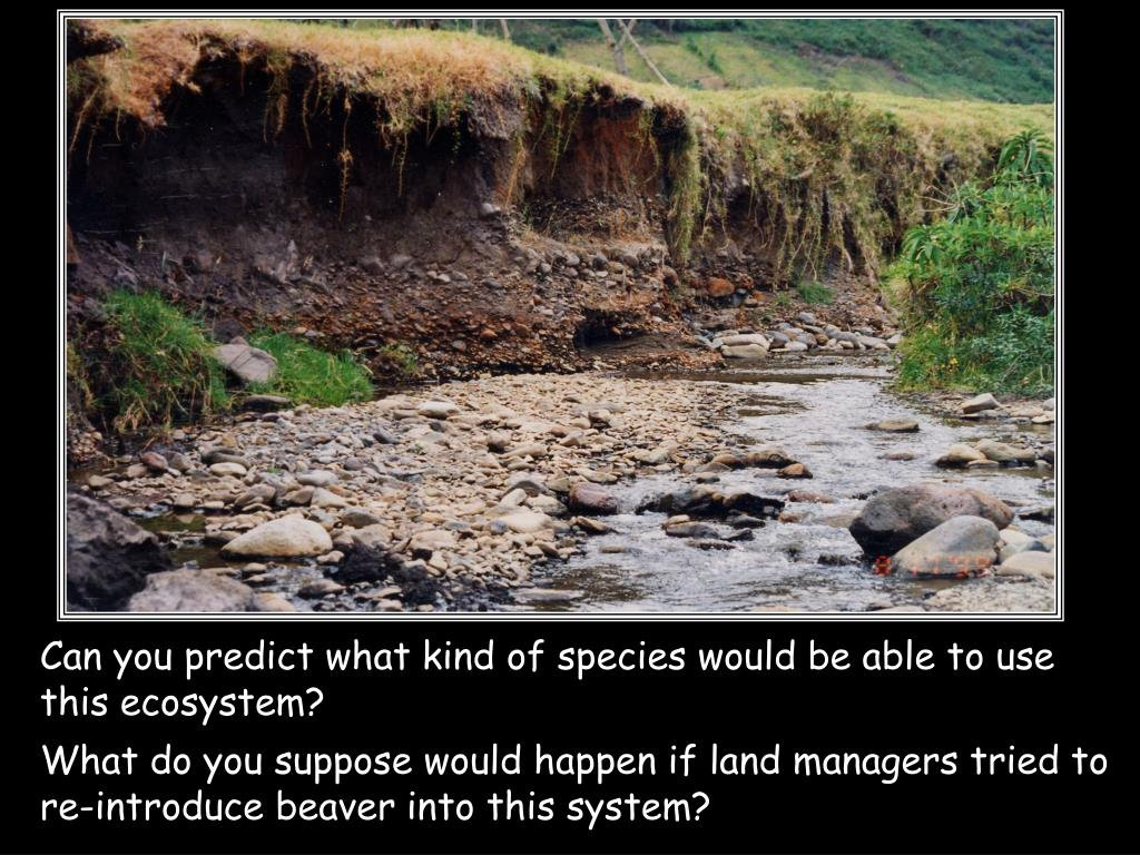 Can you predict what kind of species would be able to use this ecosystem?