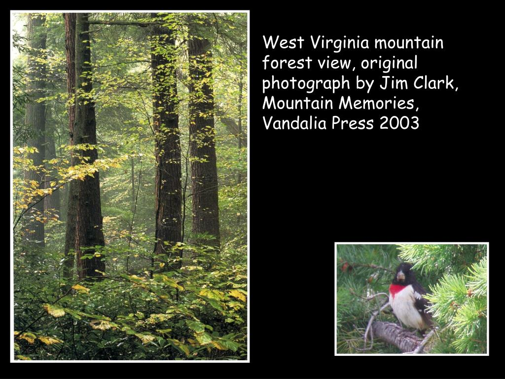 West Virginia mountain forest view, original photograph by Jim Clark, Mountain Memories, Vandalia Press 2003