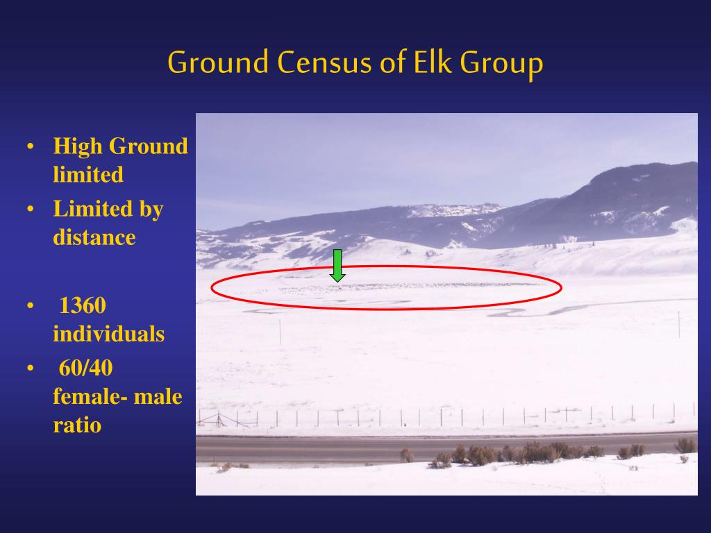 Ground Census of Elk Group