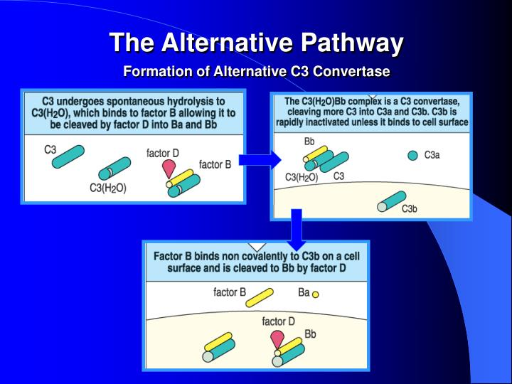 The Alternative Pathway
