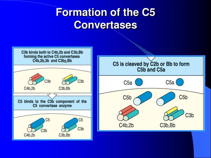 Formation of the C5