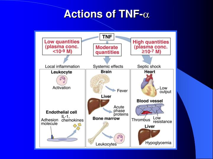 Actions of TNF-