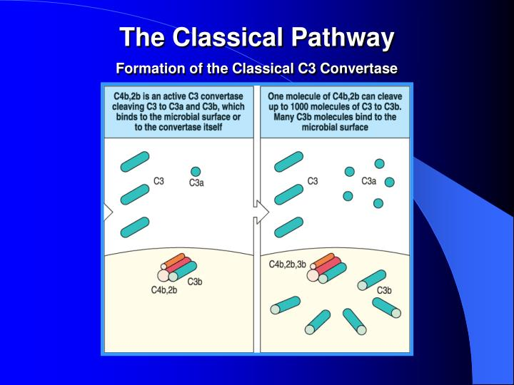 The Classical Pathway