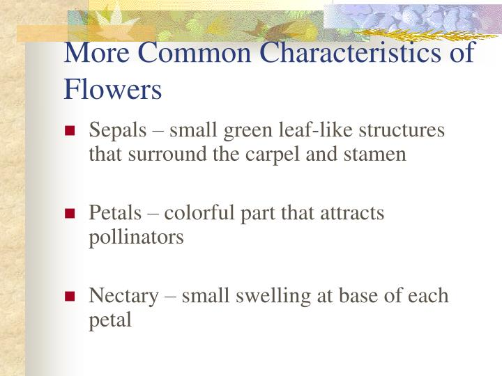 More Common Characteristics of Flowers