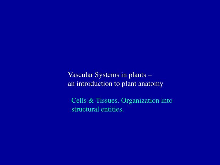 PPT - Vascular Systems in plants – an introduction to plant anatomy ...
