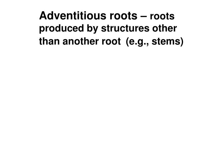 Adventitious roots –