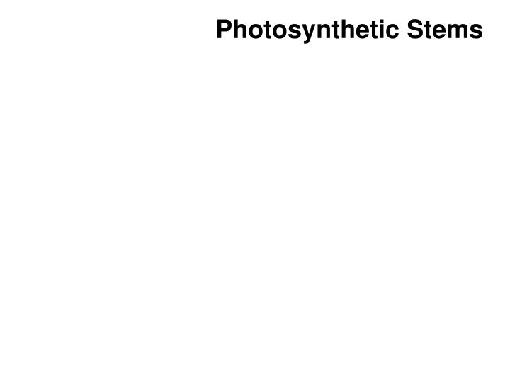 Photosynthetic Stems