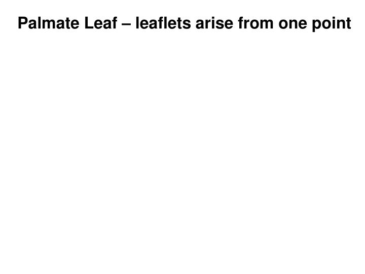 Palmate Leaf – leaflets arise from one point