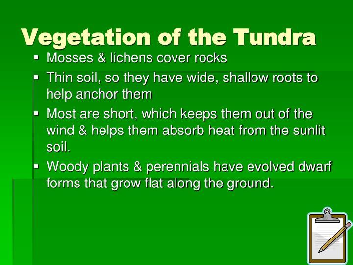 Vegetation of the Tundra