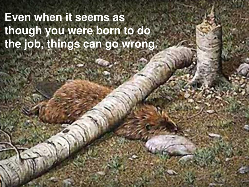 Even when it seems as though you were born to do the job, things can go wrong.